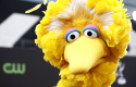 Big Bird / AP Images