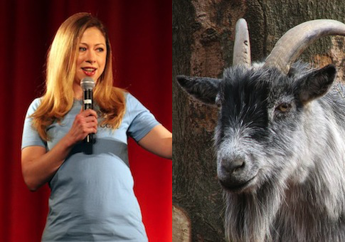 Chelsea Clinton, Goat / AP, Wikimedia Commons