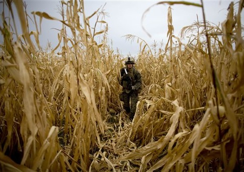 Navy corpsman Mitchell Angoglia, of Dyer, Indiana, with India company, 3rd Battalion 5th Marines, First Marine Division, walks through a cornfield, Friday, Nov. 5, 2010 in Sangin, Afghanistan.
