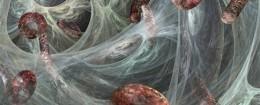 Ebola viruses / AP