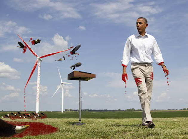 Genocide On Hold Victims Of The Obama Bird Slaughter