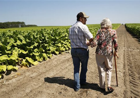 Farmer Trevor Bass assists his grandmother Evertice Bass in one of his tobacco fields at his farm in Newberry, Fla.