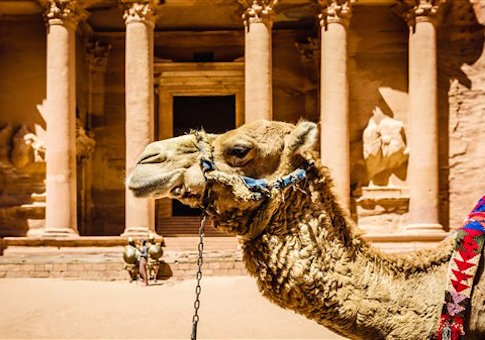 Camel by ancient building in Jordan