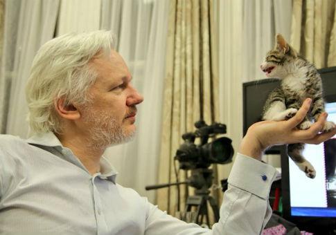 Julian Assange with his unnamed kitten / Twitter