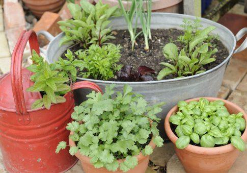 Potted plants / AP