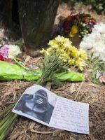 Cincinnati Zoo Gorilla Death harambe