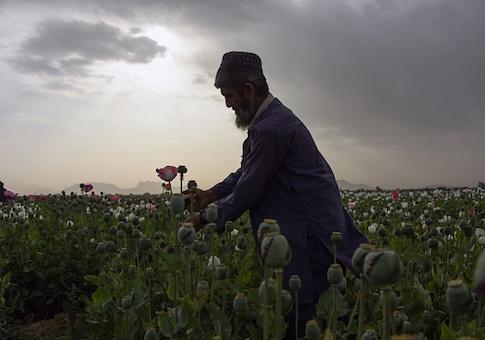 Afghanistan opium