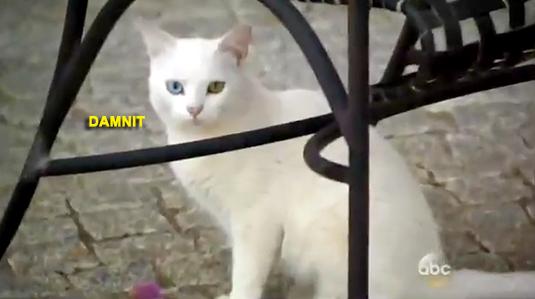 1-cat