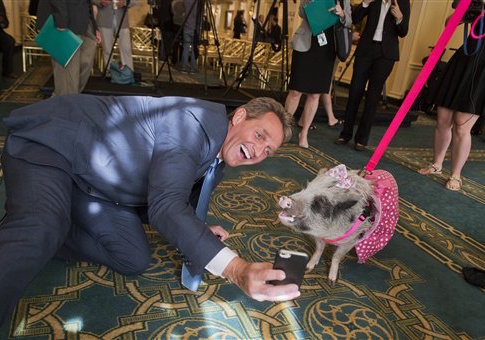 Jeff Flake with Faye the pot bellied pig