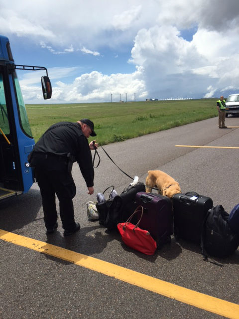 Search of the Southwest flight by canine units.