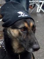 Timoshenko the dog