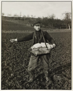 Farmer Sowing, 1952