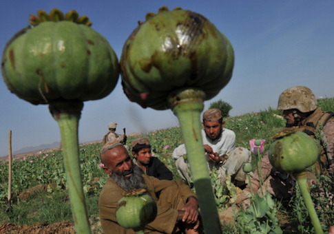An Afghan law enforcement professional embedded with the Marine Corps questions an opium poppy farmer in Helmand province