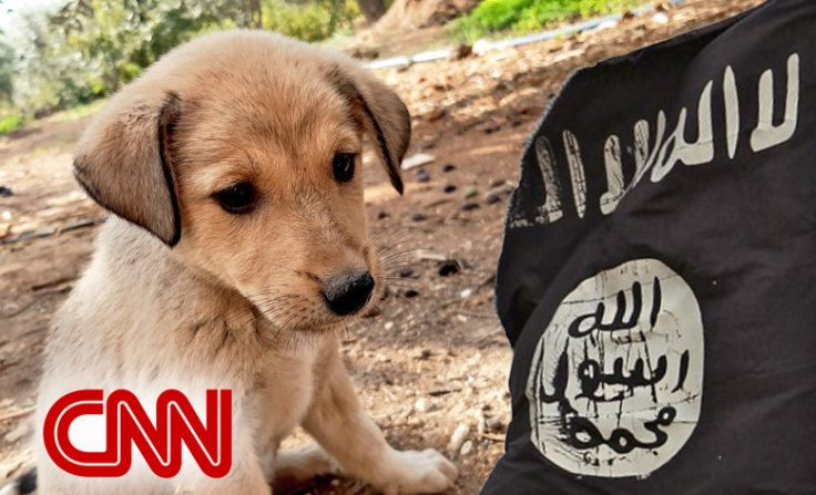 Dog injured in al-Baghdadi raid holds press conference on SNL